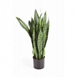 Сансевиерия зеленая куст большой 95 см