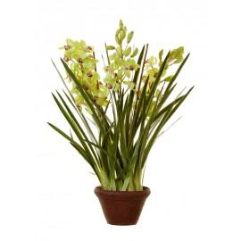 Орхидея Цимбидиум куст св.зелен большой в кашпо 115 см