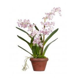 Орхидея Дендробиум сиренево-белая 60 см в терракот.кашпо