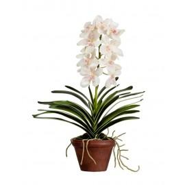 Орхидея Ванда кремовая с розовой крапинкой 2 ветки 52 см в терракот кашпо