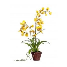 Орхидея Дансинг Канарейка 65 см в терракот.кашпо