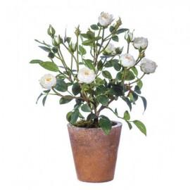 Роза-мини куст садовая белая 35 см в св.терракот.кашпо