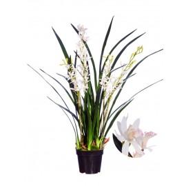 Орхидея Цимбидиум-мини Элегант большой в-97 см 4 ветки в кашпо