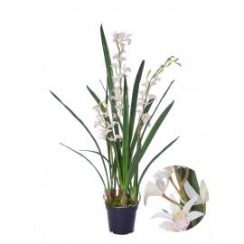 Орхидея Цимбидиум-мини Элегант в-96 см 3 ветки в кашпо