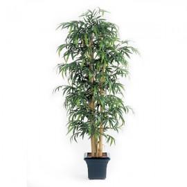 Бамбук Новый гигантский 150 см