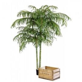 Пальма Арека двухствольная 230 см