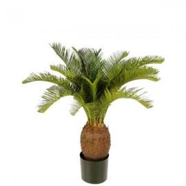 Пальма Цикас 65 см