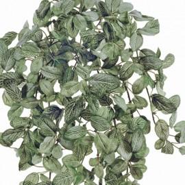 Фиттония Фрост припыленная бело-зеленая ампельная 45 см